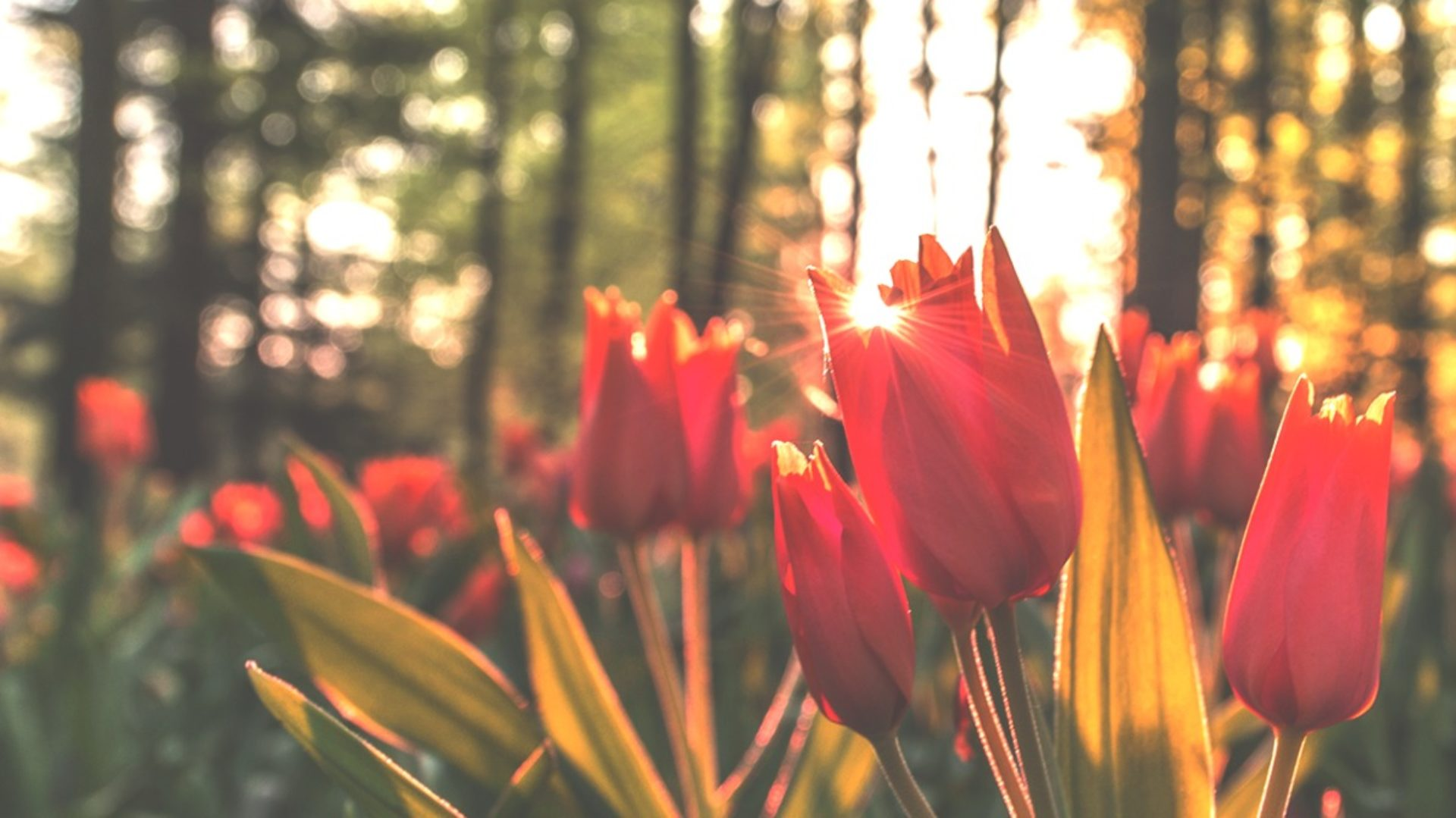 Onoranze Funebri I Tulipani